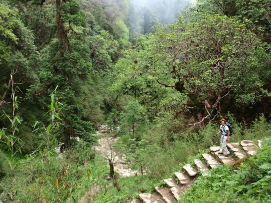 Afdalen door de jungle over stenen trappen