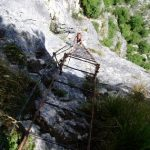 Afien onderaan de ladder