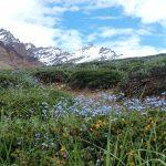 Bloemen en uitzicht in het kamp Manechand
