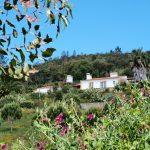 Mooie huizen en bloemen