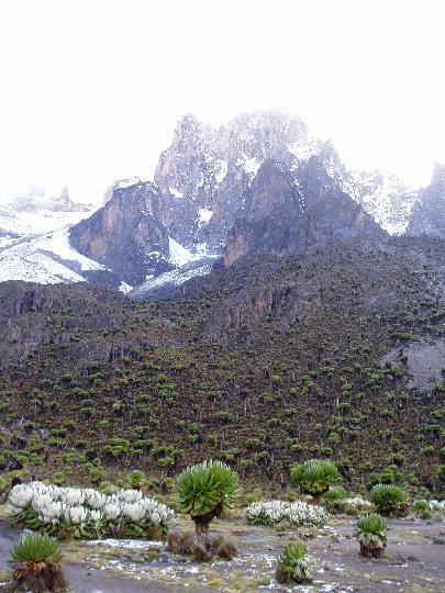 Mount Kenya sneeuw en bijzondere vegetatie
