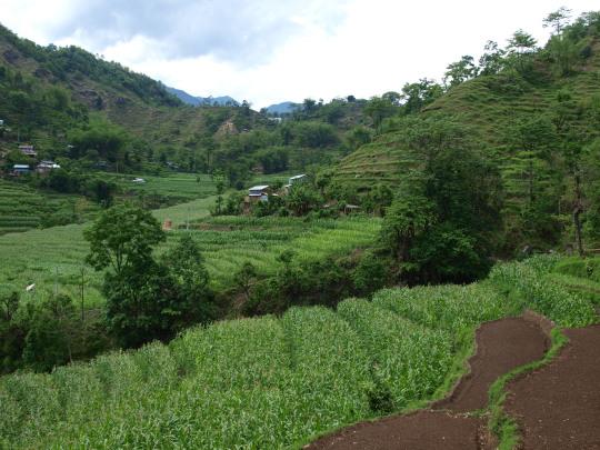 Terug in de groene rijst en maisvelden