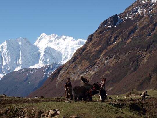 Tibetaanse boeren ploegen voort, hier geen stakingen