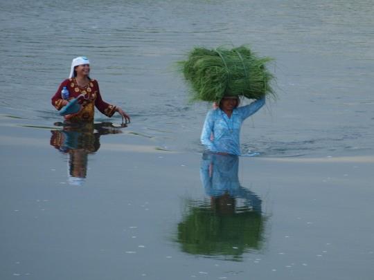 Vrouwen hebben gras gesneden voor de koeien thuis en steken de rivier over